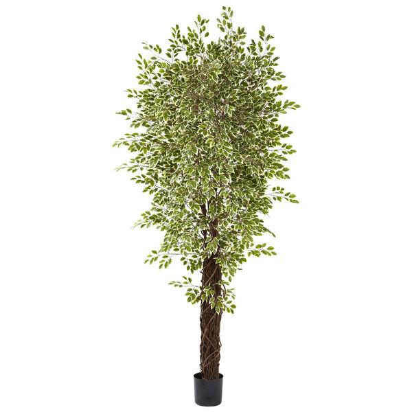 Green 7.5 Foot Variegated Mini Ficus, image 1