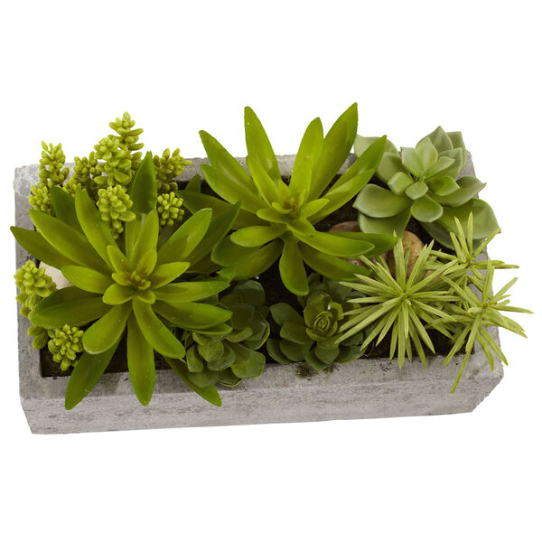 Green Succulent Garden with Concrete Planter, image 2