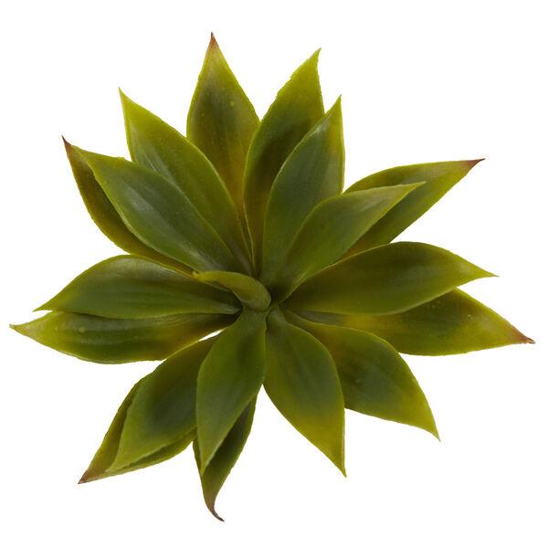 Green Mini Agave Succulent Plant, Set of 12, image 3