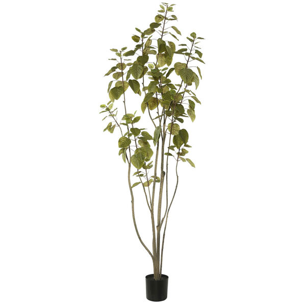 5 Ft. Cotinus Coggygria Tree with Pot, image 1