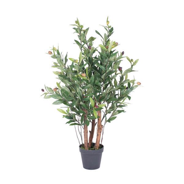 Olive Tree in Pot, image 1