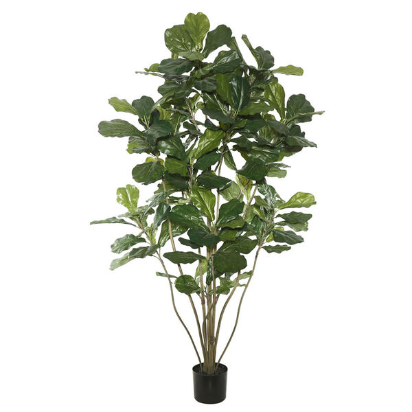5 Ft. Potted Fiddle Tree, image 1