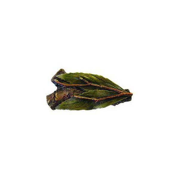 Hand Tinted Brass Leafy Twig  Knob , image 1