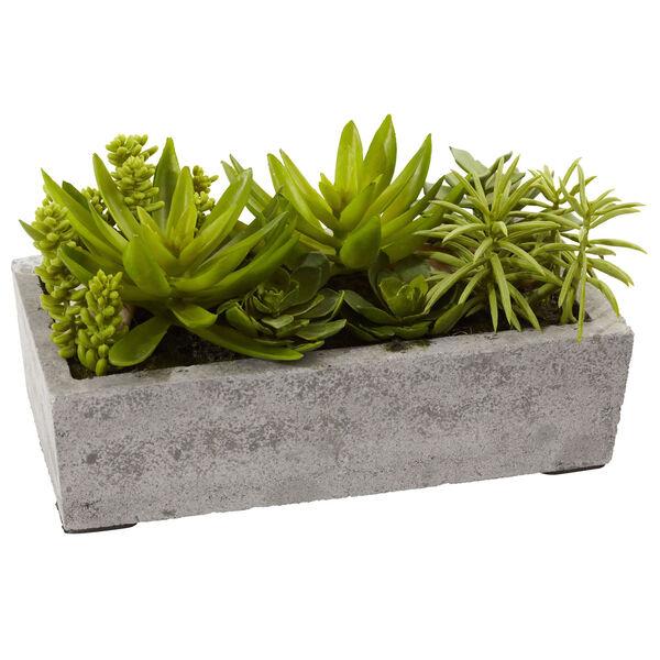 Green Succulent Garden with Concrete Planter, image 3