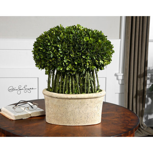 Preserved Boxwood, Willow Topiary Botanical, image 2