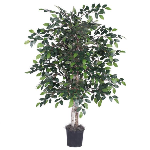 4 Ft. Mini Ficus Bush, image 1