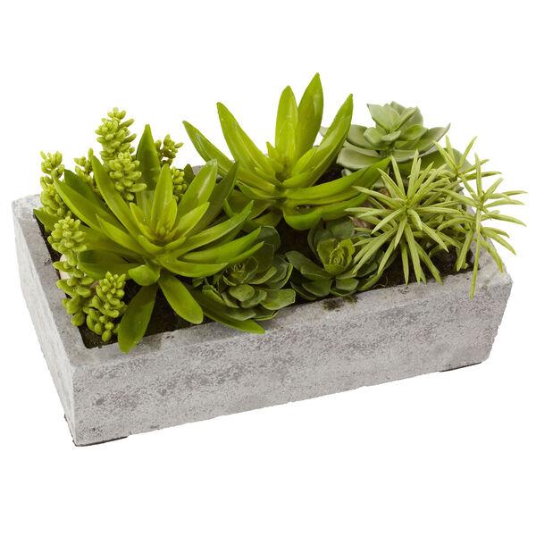 Green Succulent Garden with Concrete Planter, image 1