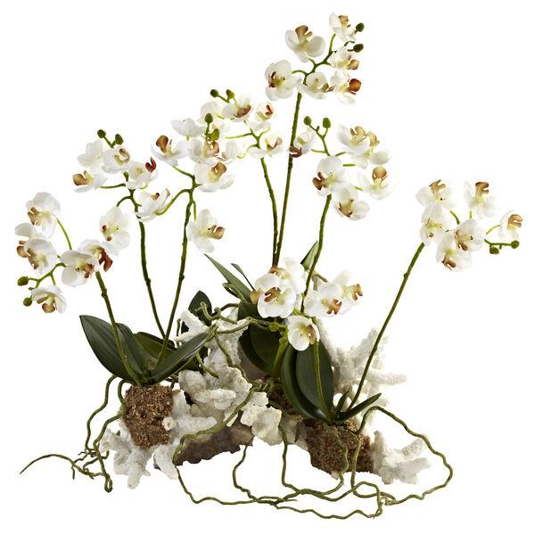 White Mini Phalaenopsis Set on Coral, image 1