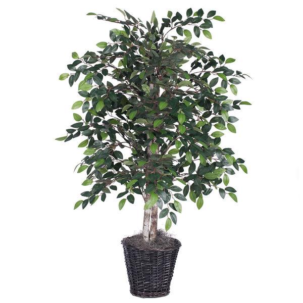 Mini 4 Ft. Ficus Bush, image 1
