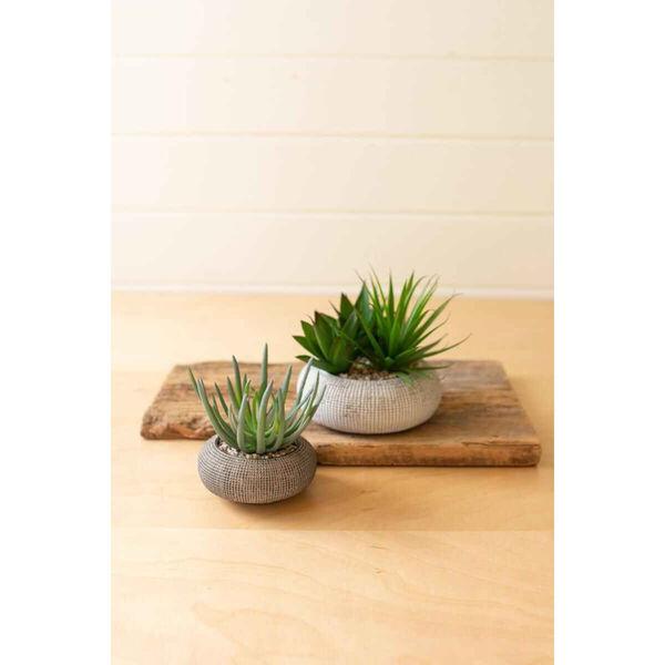 Gray Succulents in Concrete Pots, Set of Two, image 1