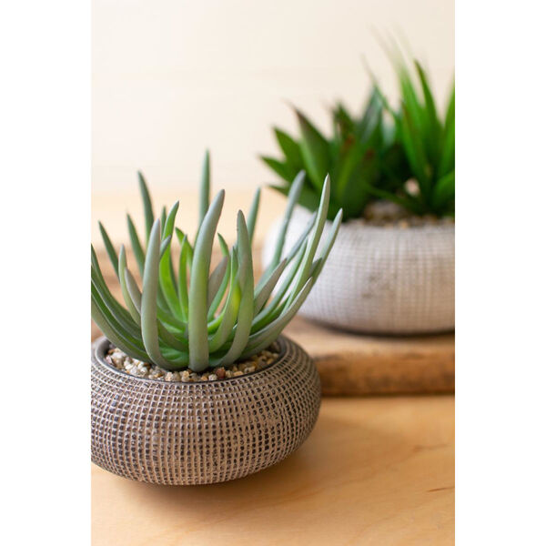 Gray Succulents in Concrete Pots, Set of Two, image 2