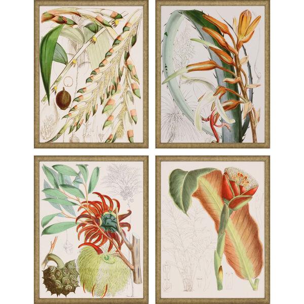 Tropical Variety Orange Framed Art, Set of Four, image 2