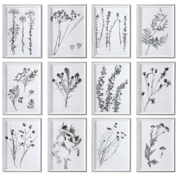 Contemporary Botanicals Black and White Framed Prints, Set of 12, image 1