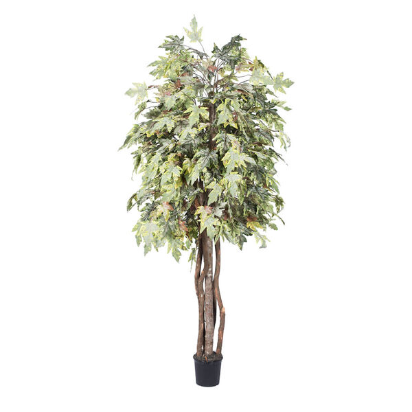 6 Ft. Frosted Maple Executive, image 1